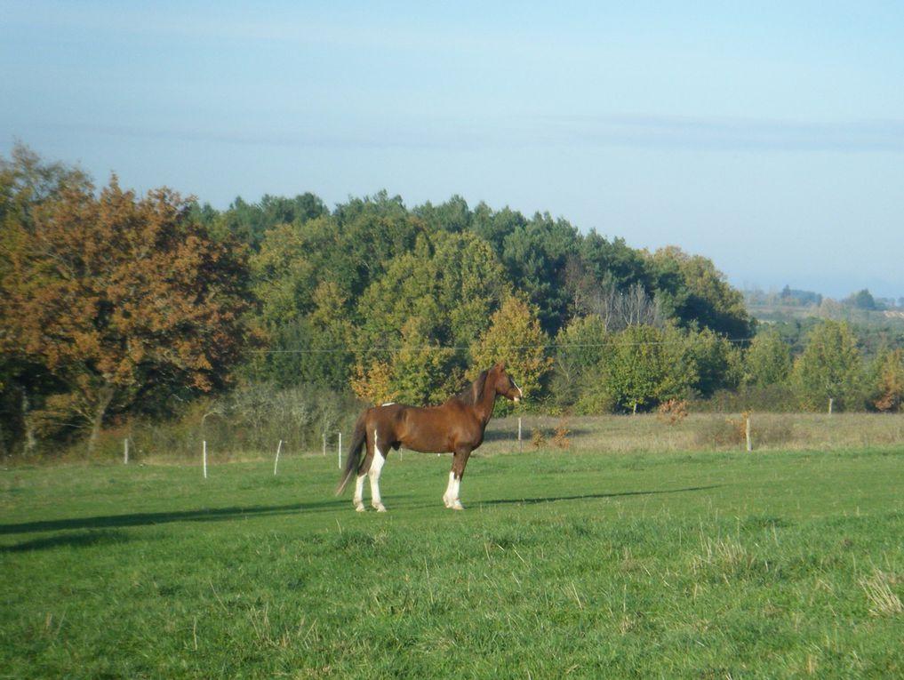 cheval au pré!