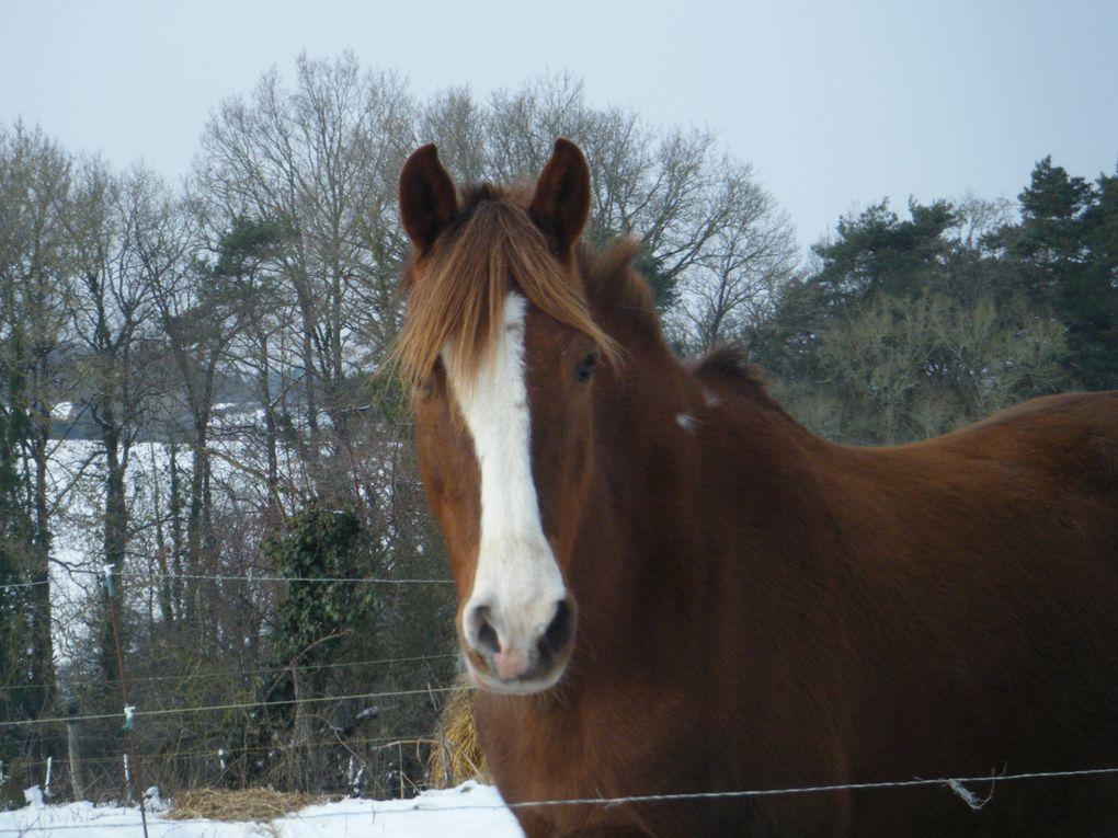 Album - cheval
