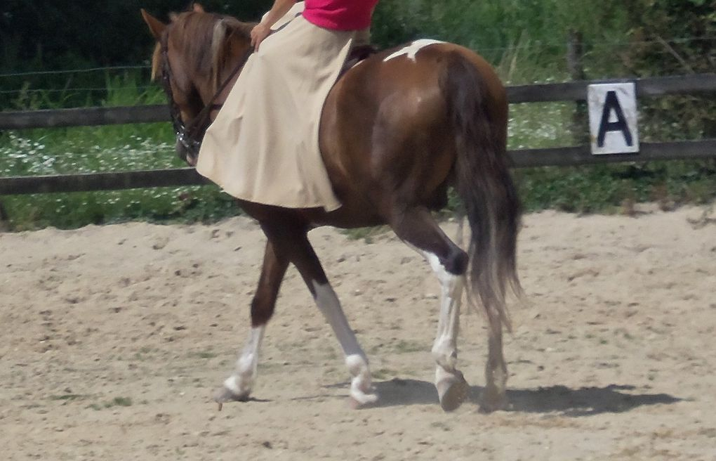 Album - equitation-en-amazone-side-saddle