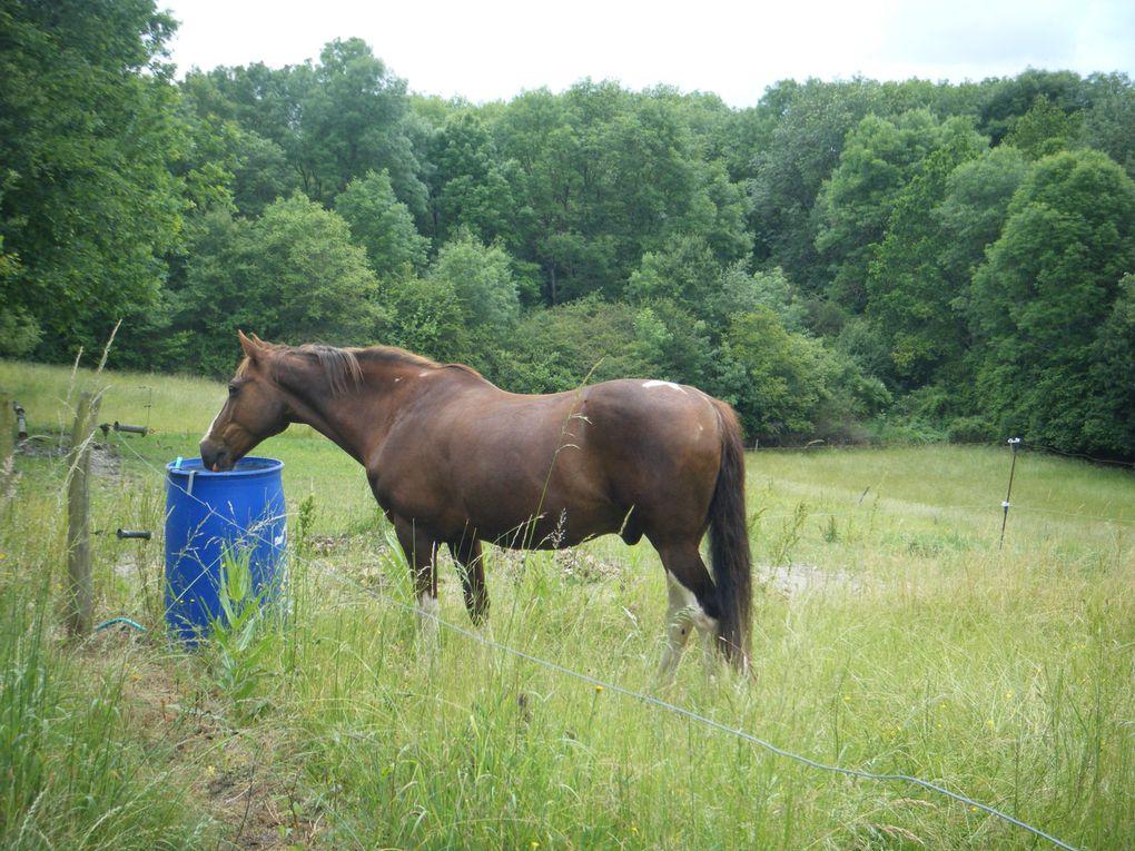 Album - cso-equestre