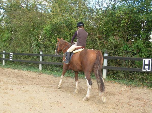 en amazone, avec ma nouvelle selle d'amazone, de marque champion and wilton, depuis octobre 2008.