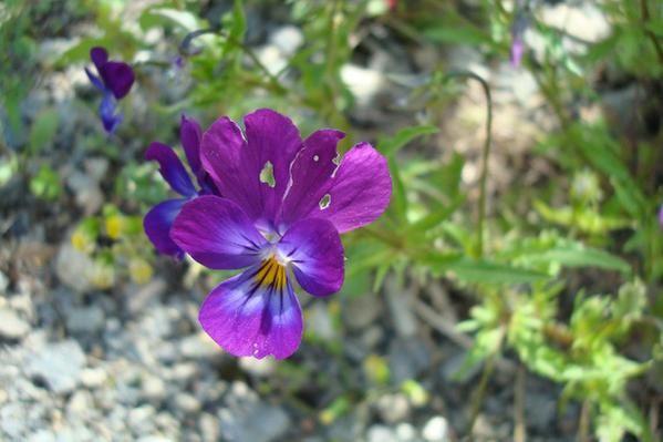 Fleurs de mon jardin ou au hasard de mes ballades..j'Habite la Bretagne..riche en flore..