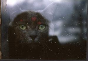 Mes Amours ..Mes chats !Ceux qui m'accompagnent aujourd'hui où qui ne sont plus et que je n'oublie pas!