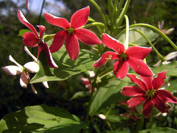 Faune, flore et paysage de Guyane