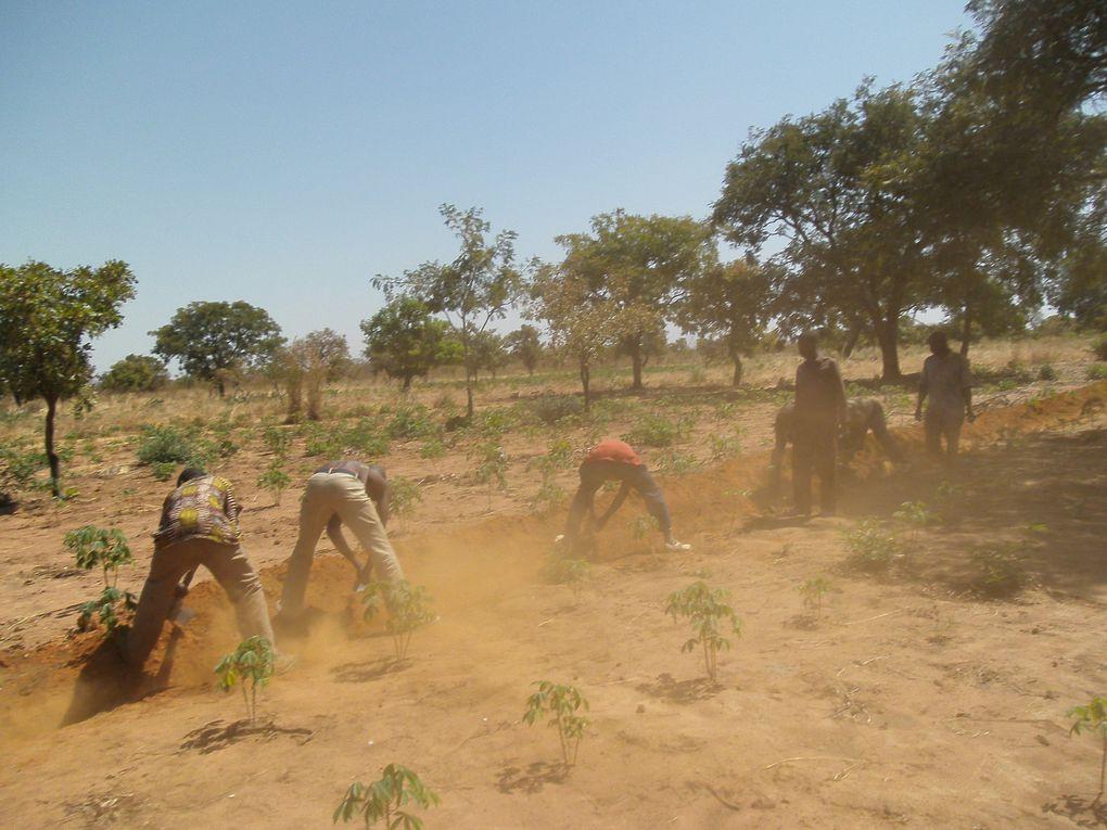 Les activités de l'année 2 du projet de Programme Intégré de développement Agropastoral de la Fondation Wurodini Service (FWS) en faveur des populations des six villages de la zone de Doufiguisso à 27km de Bobo-Dioulasso.
