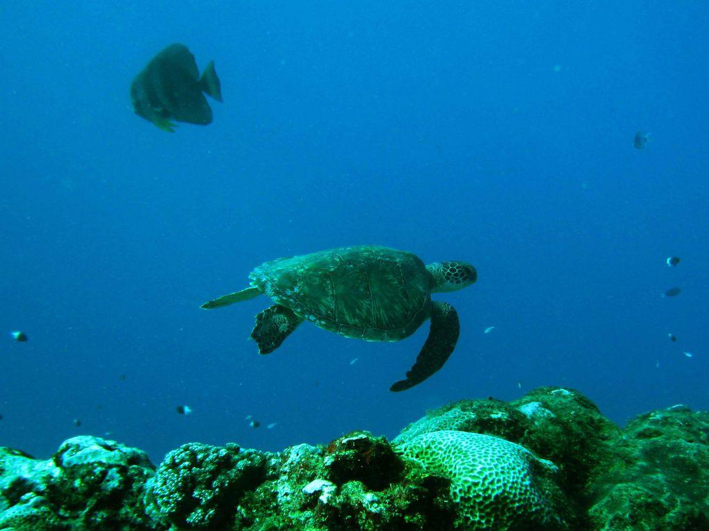 Album - tortues, dauphins et baleines