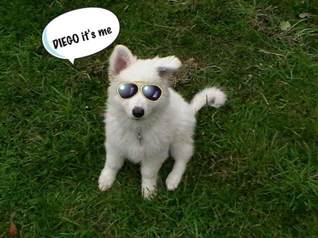 Album dr le de chien diego le bbs - Race chien volt ...