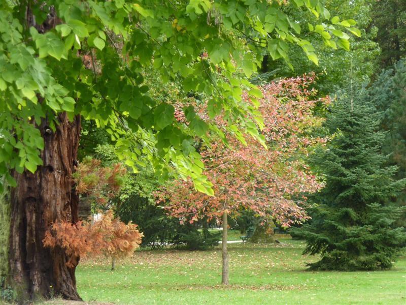 Le jardin Massey à Tarbes