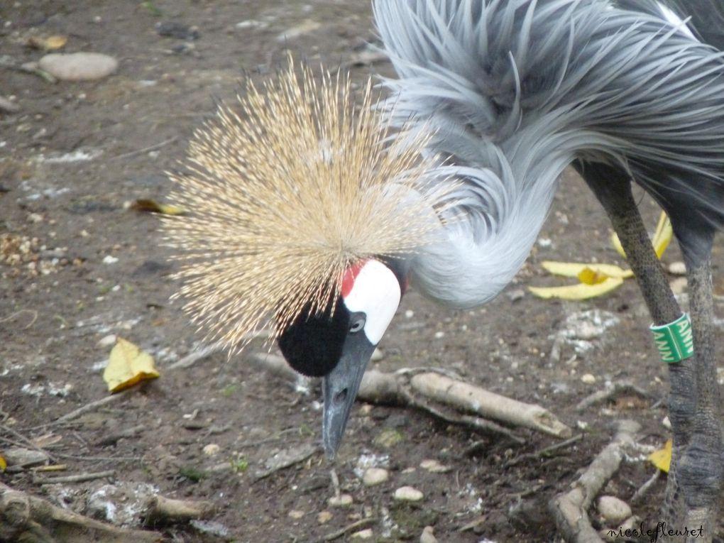 près de Lyon, une magnifique réserve d'oiseaux des 5 continents