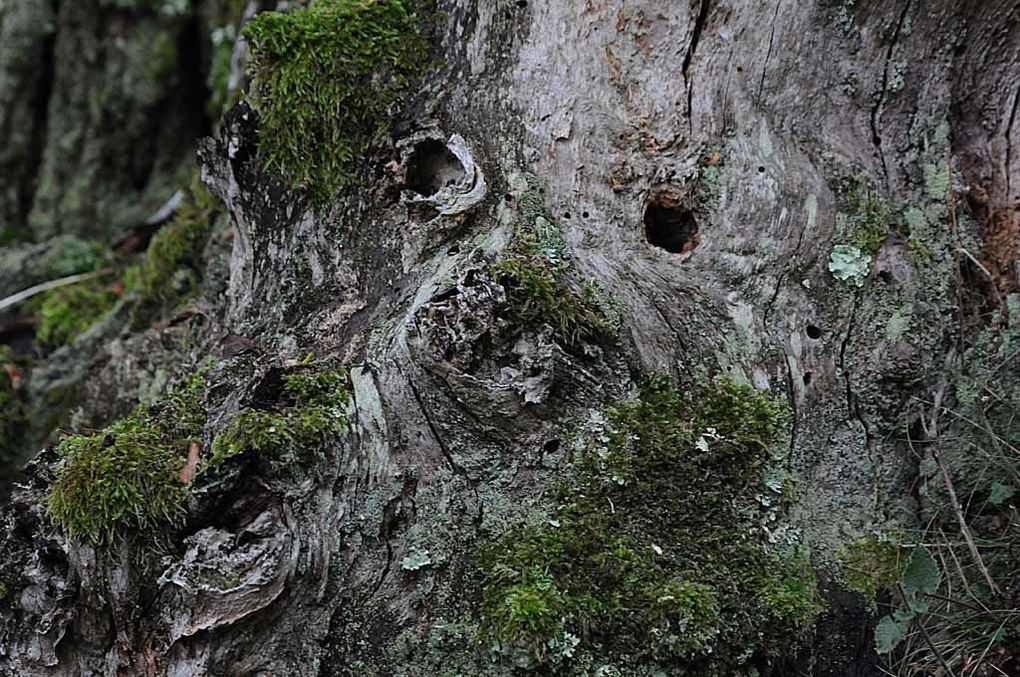 Album - Visages Arbres-2