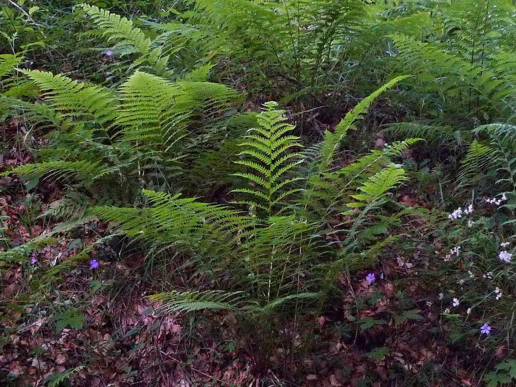 Album - Feuilles--fougeres--herbes--.-3
