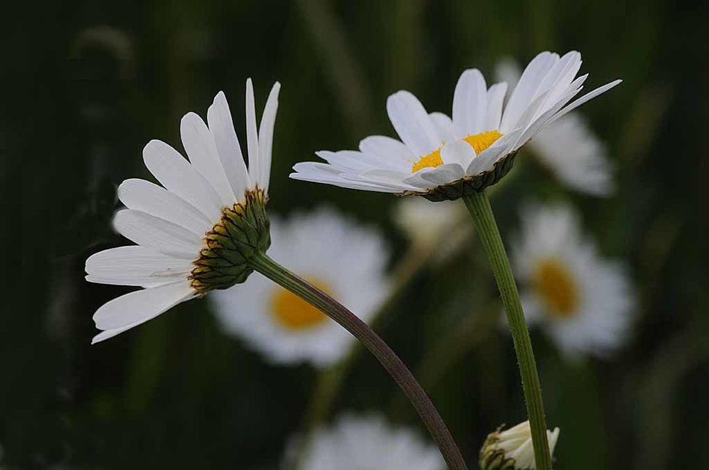 Album - Fleurs-8