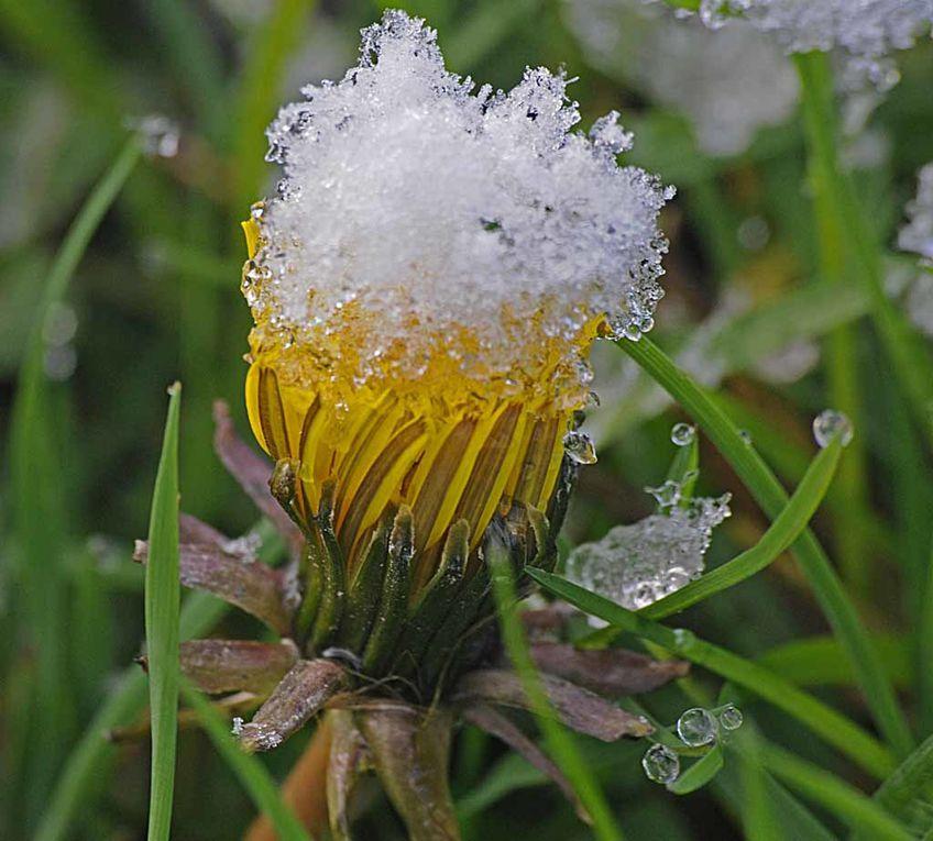 Album - Givre--neige-.-3