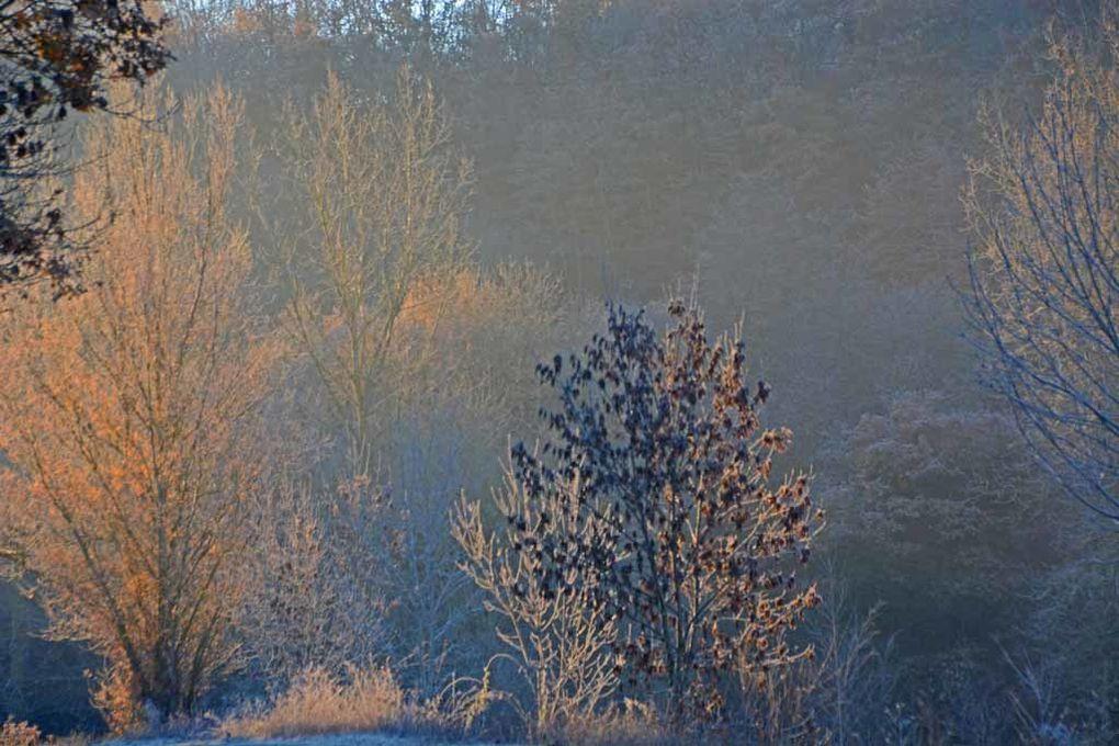 Album - Givre-neige-6