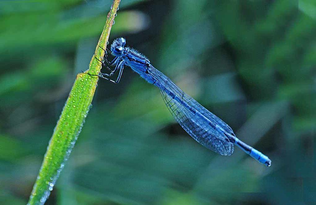 Album - Insectes-papillons-3