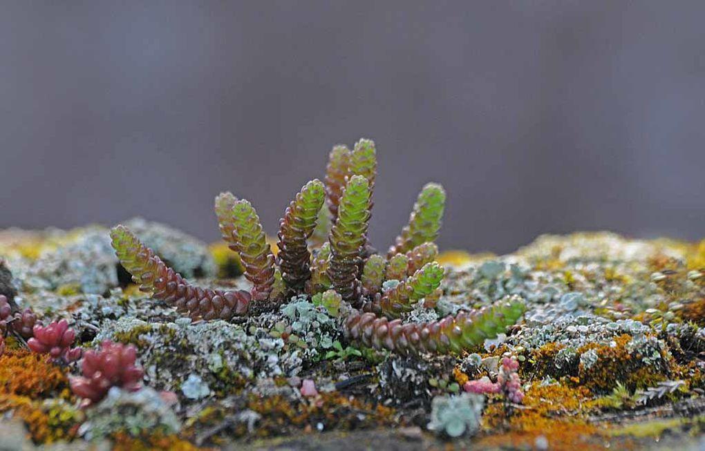 Album - Mousse--lichens--sable roches
