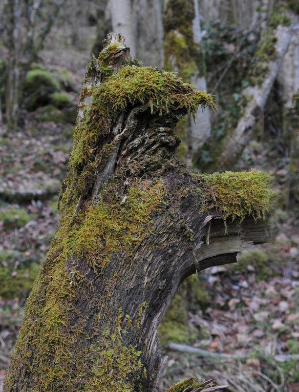 Album - Visages-d-arbres