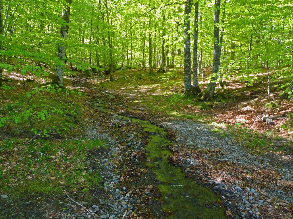 Album - Forêt - Arbres