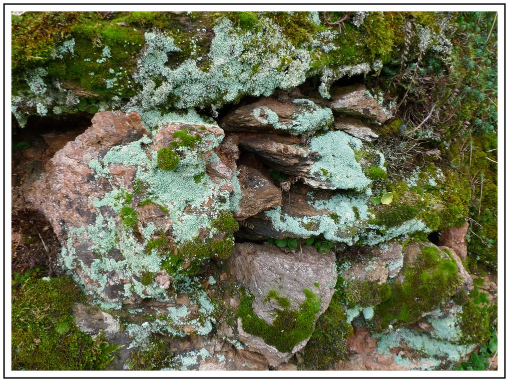 Album - Photos-Sable- lichens- mousse - roches