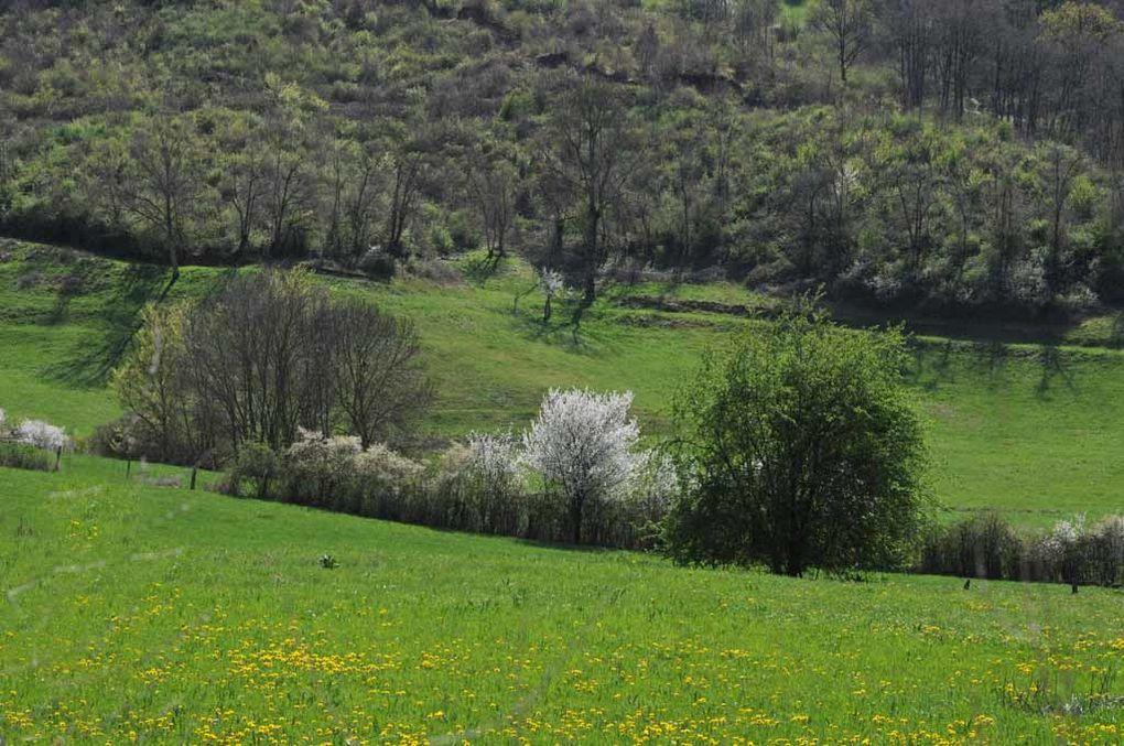 Fleurs images printemps