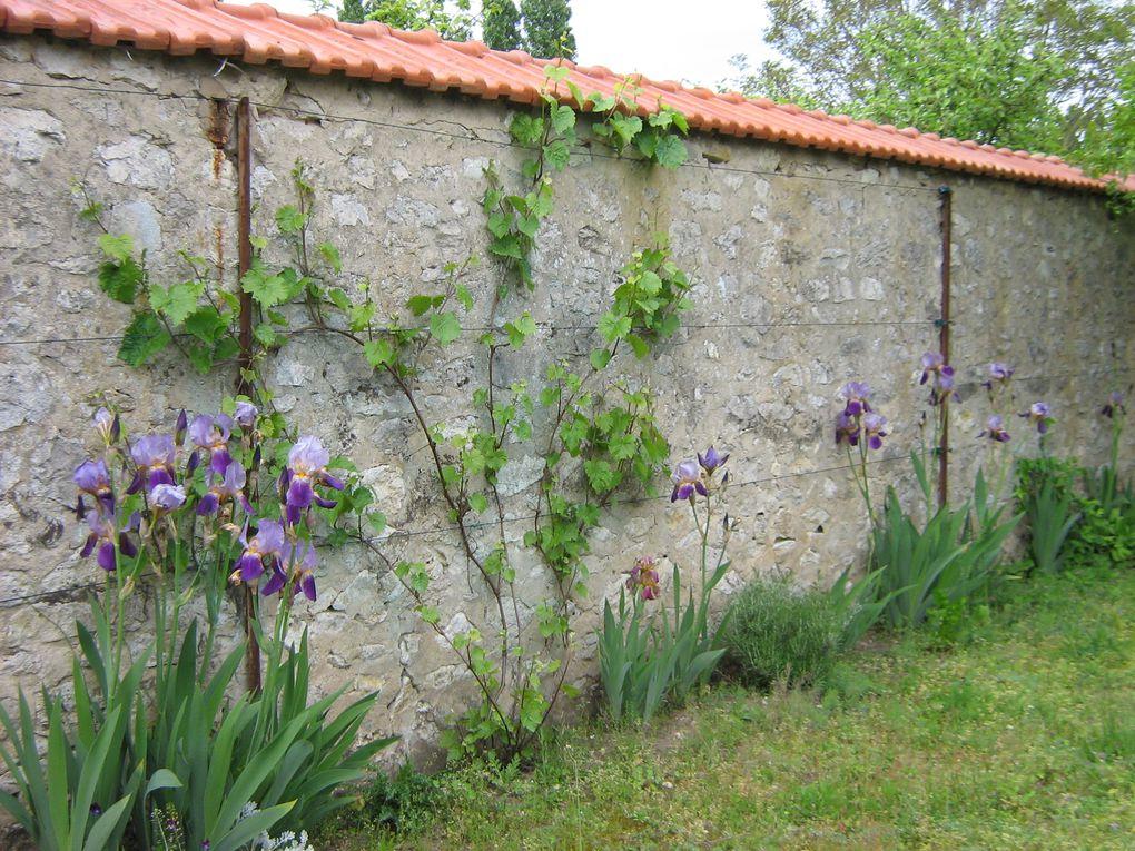Cette plate-forme de 40m2 emplie de gravats du fond du Jardinoux, après un travail depuis 5ans, est devenue bien sympathique. Parmi les fleurs et les Simples les papillons et abeilles pourront voleter et bourdonner.