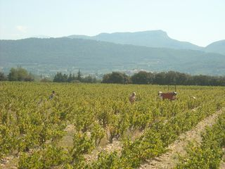 Album - Vendanges-Vinifs-2011