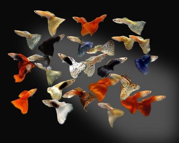 Photos de poissons et d'aquarium