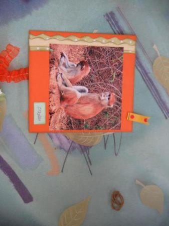 Album - Album--Afrique-Animale-