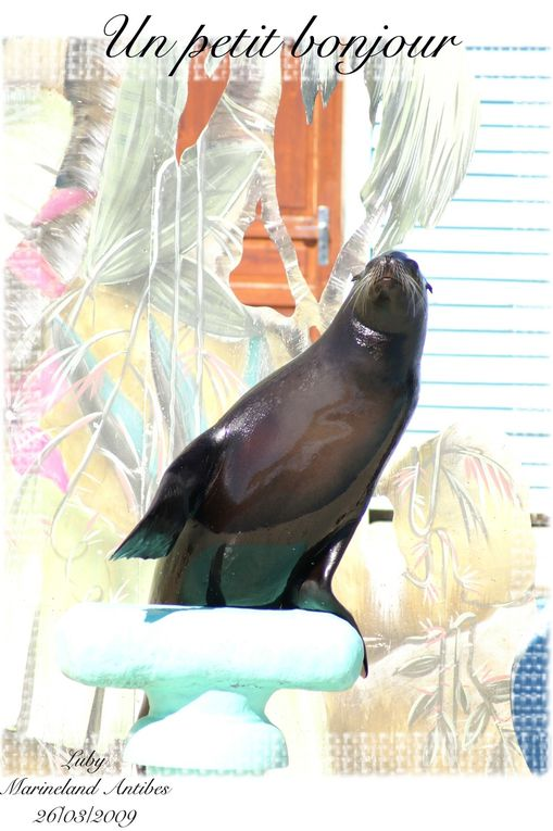 Mon voyage à Antibes : Marineland Dauphins, Otaries, Orques, Rapaces, ...