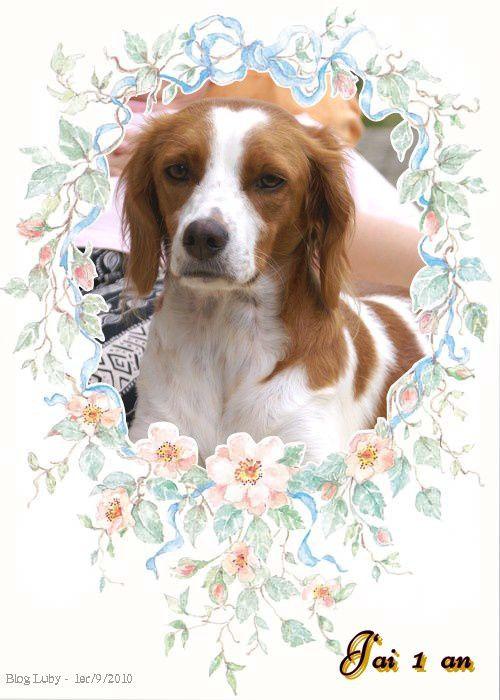 Voici ma nouvelle chienne qui est née le 1/9/09 et qui est à la maison depuis le 14/11/09