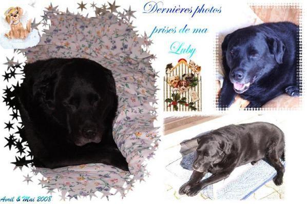Mon bébéNotre chienne nous a quitté brutalement le 10 mai 2008 d'un cancer.Notre coeur est bien vide