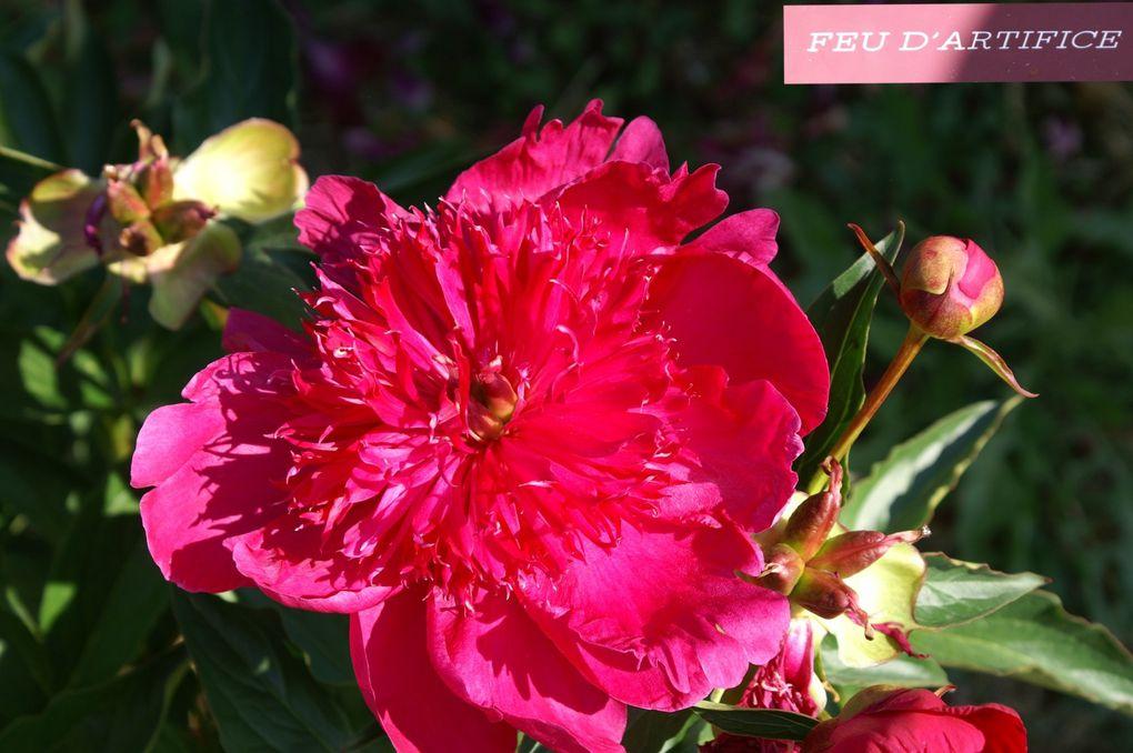 Je vous propose une ballade aux Pivoines Rivière de Crest et au Jardin Zen d'Erik Borja que j'ai réalisée le samedi 21/5/2011 avec l'association Floriscola