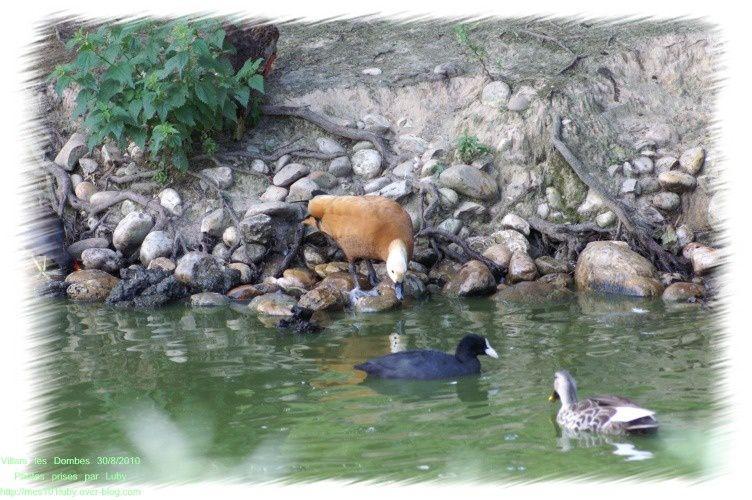Lieu magique où il y règne une sérénité, un calme, une harmonie entre les animauxJ'ai visité ce parc le 30 août 2010 avec mari, nous avons été enchantés, émerveillés.Je vous laisse découvrir nos photos.