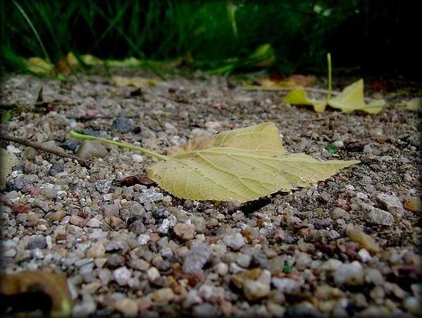Album - La nature ...