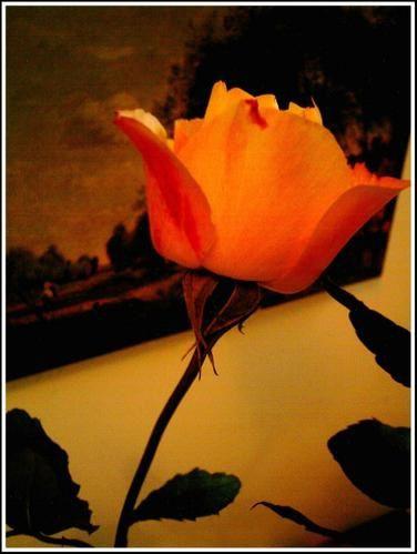 Album - roses, mandalas,