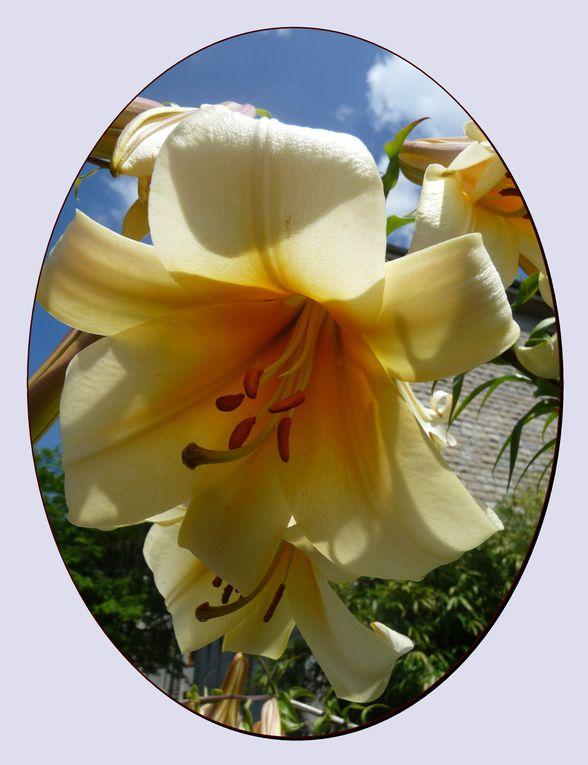 fleurs de printems