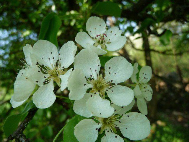 Album - fleurs de printemps