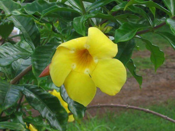 Flore de Tahiti