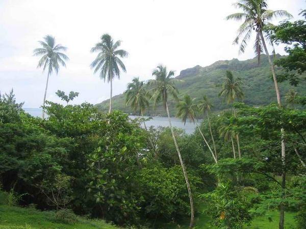 découvrez l'île de Moorea