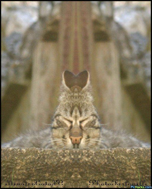 "<br /><br /><center><font size=""16""><b><i><a href=""http://animal-photos.over-blog.com/"">AnimallaminA</a></i></b></font></center>"