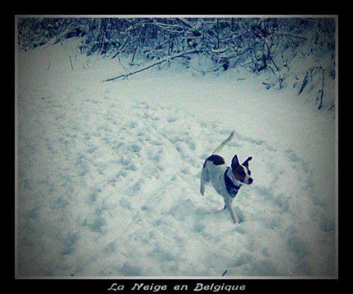 Album - Variation de neige