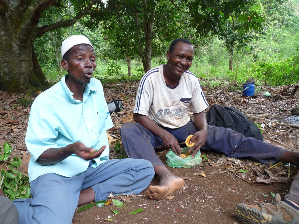 Grande-Comore,Karthala,Mohélioctobre 2009