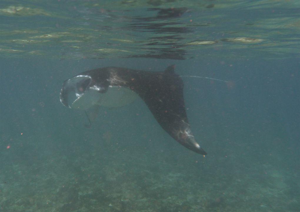 Sortie piscines du nord face Longoni du 11/06/11 avec djamel et céline
