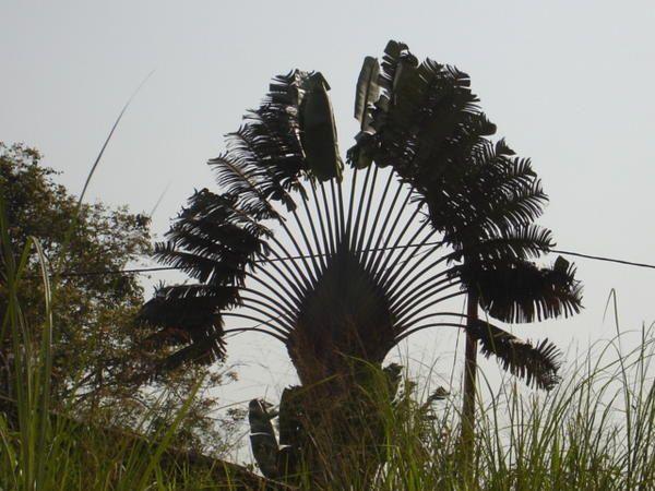 Album - Afrique-Centrale