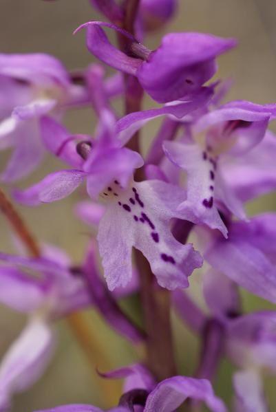 photos botanique