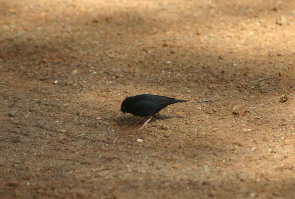 Album - Animaux-du-Senegal