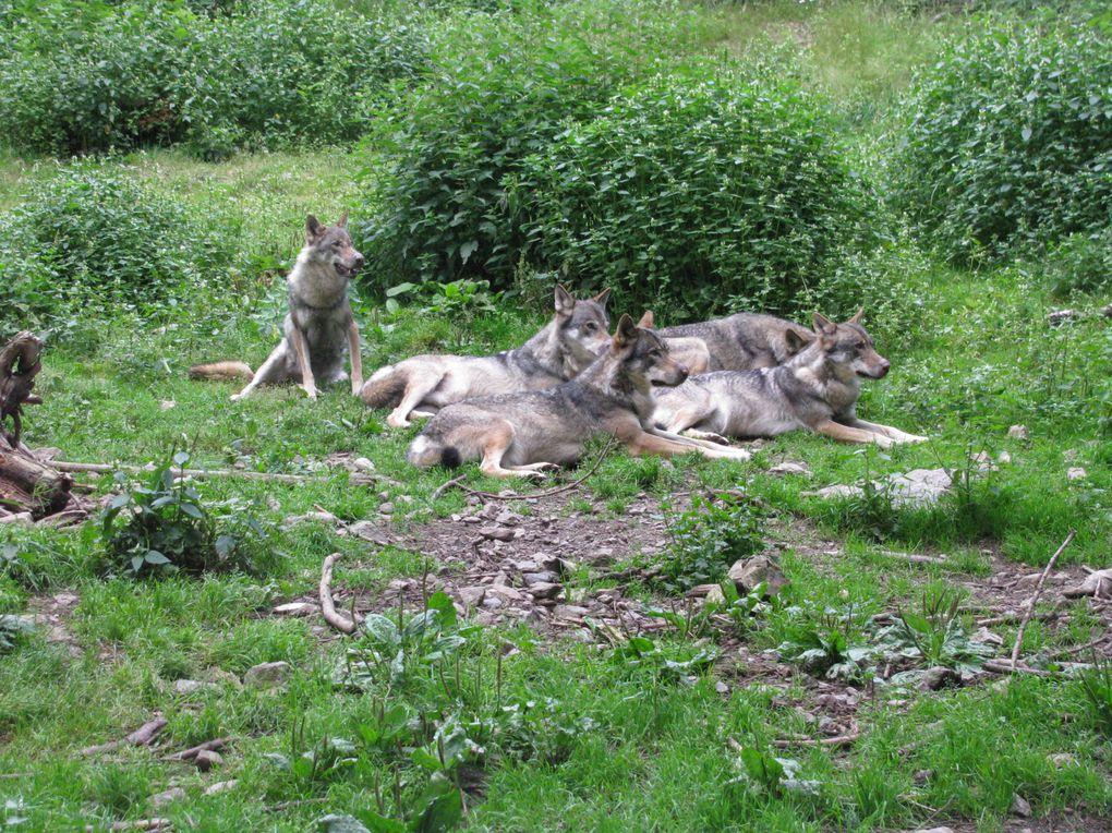 Une bonne balade a Saint-Martin-Vésubie dans le parc animalier Alpha.