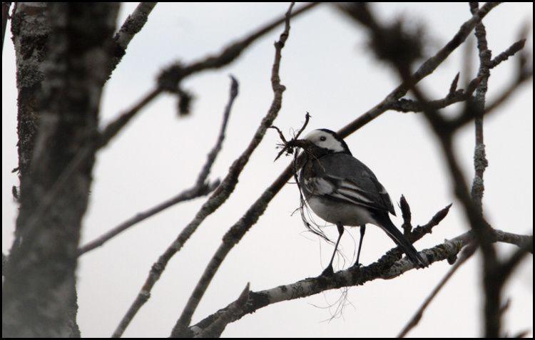 Album - Oiseaux---rapaces---hérons