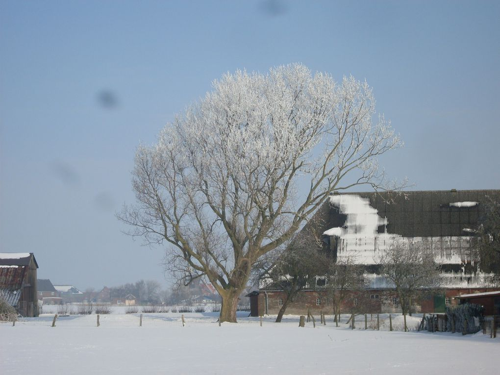 Album - Winter-2010