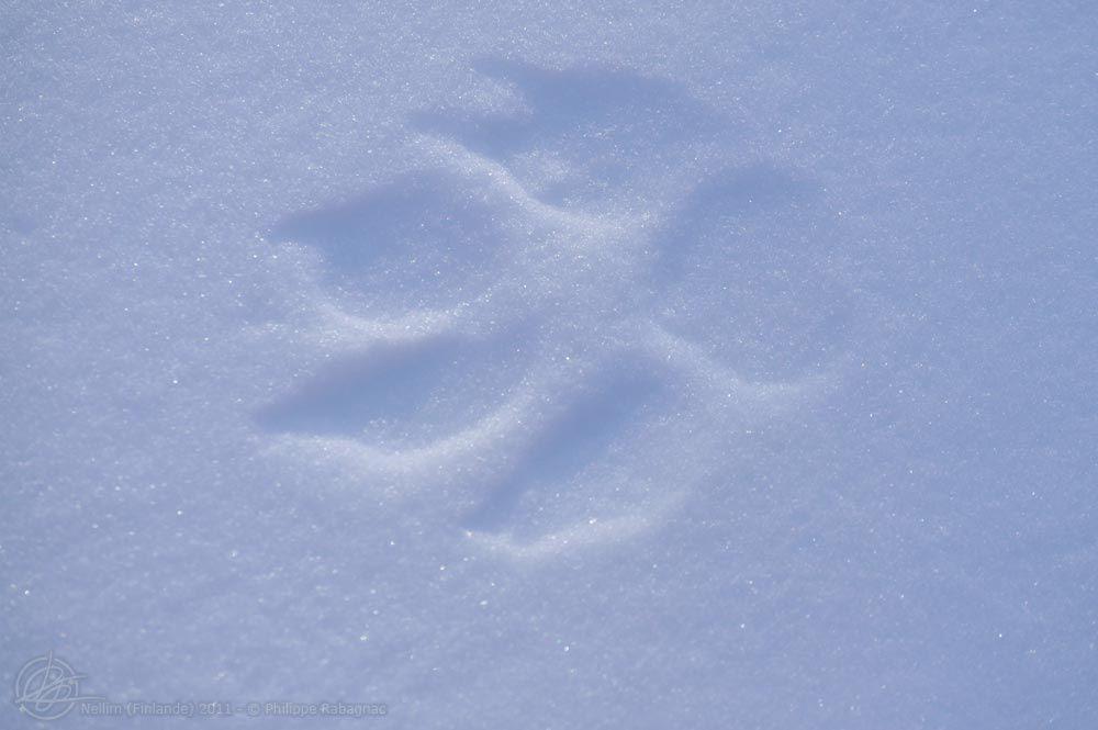 Séjour hivernal à Nellim (nord de la Finlande) Février-Mars 2011 - Les coulisses